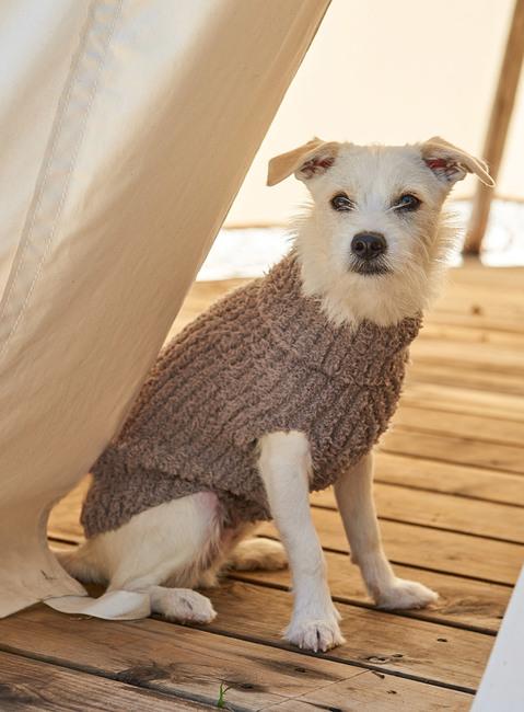 COZYCHIC™ RIBBED DOG SWEATER