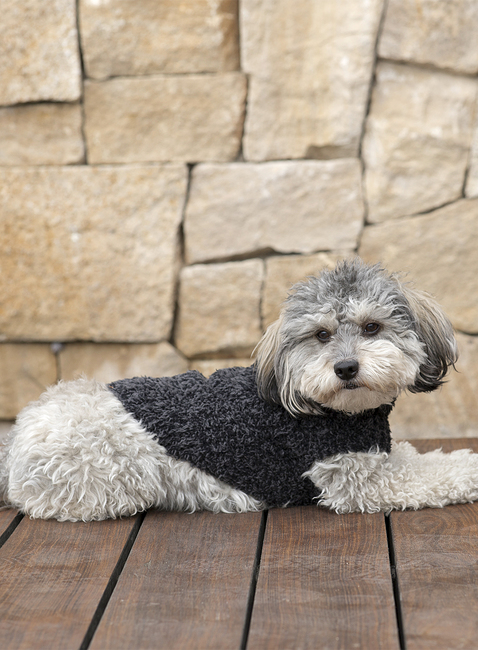 COZYCHIC™ RIBBED PET SWEATER
